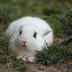 Le lapin et la route de la peur