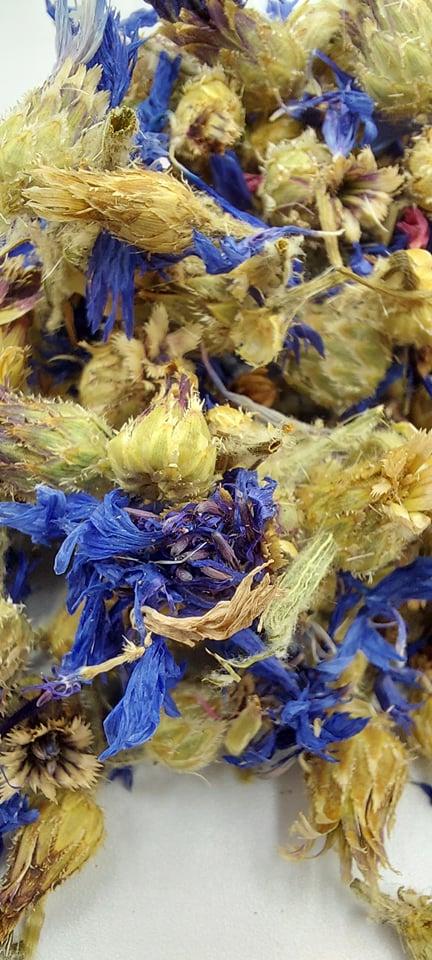 bleuets fleurs lapins rongeurs bamm paris