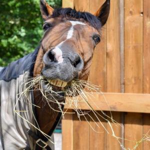 box-decouverte-chevaux
