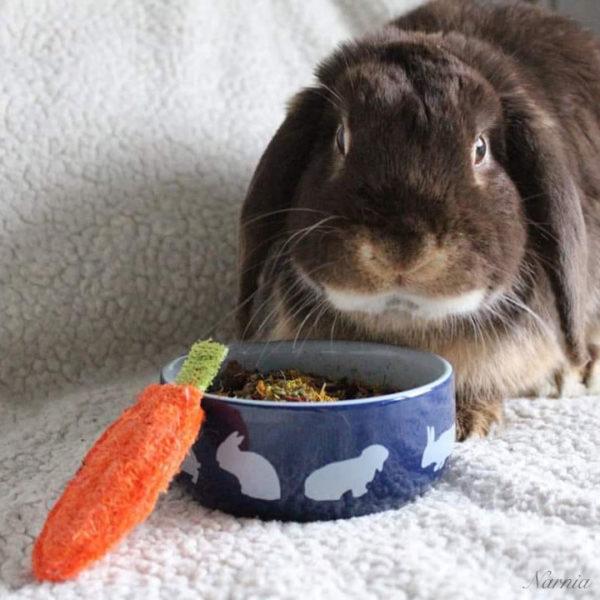 carotte-luffa-1