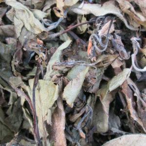 feuilles-pommier