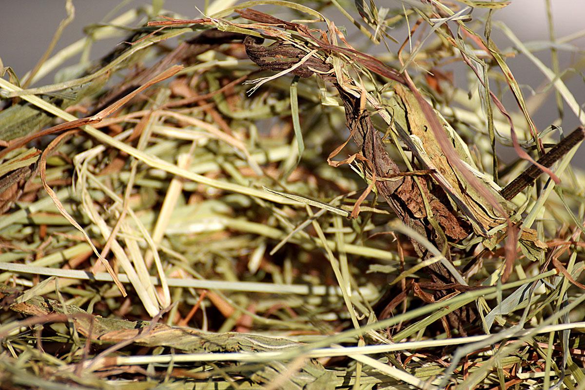 Foin de Crau AOP