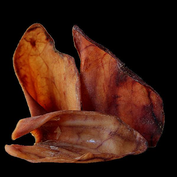 oreille-porc