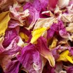 Pétales de Roses du Périgord