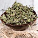 feuilles de menthe poivrée