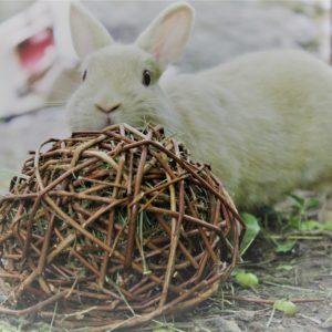 Balle en osier pour rongeur et lapin