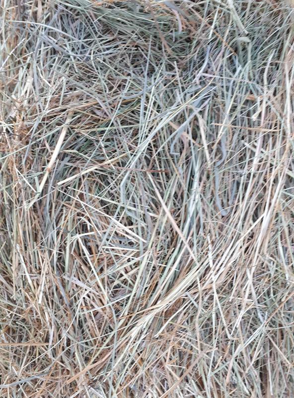 Foin de prairie Castels