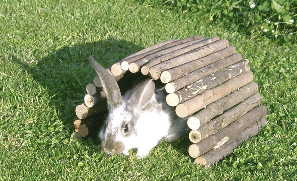 pont en bois lapin et rongeurs 3