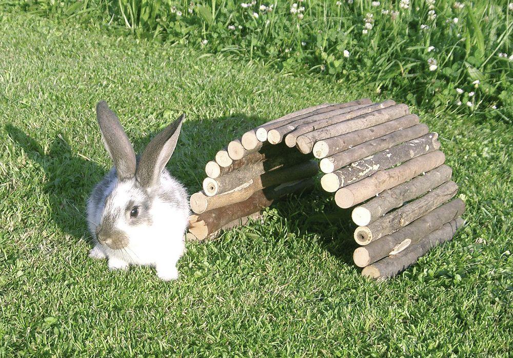pont en bois lapin et rongeurs
