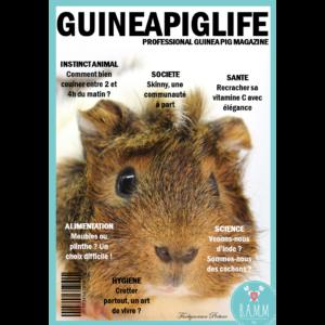 couverture-magazine-cochon-d'inde-bamm-paris