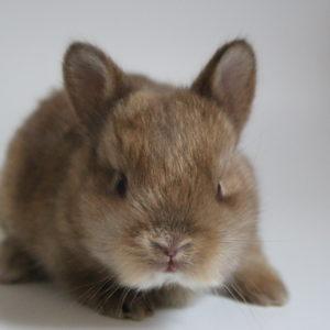 Choisir son premier lapin