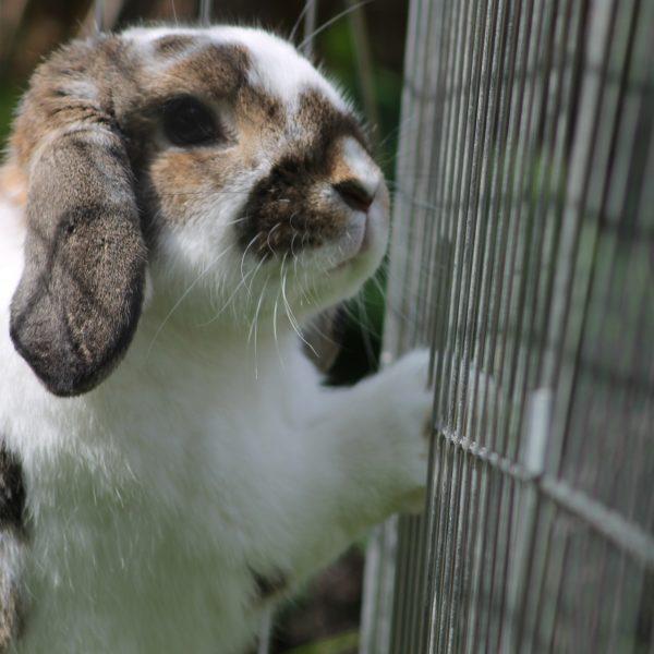Annuaire association liste lapins NACs