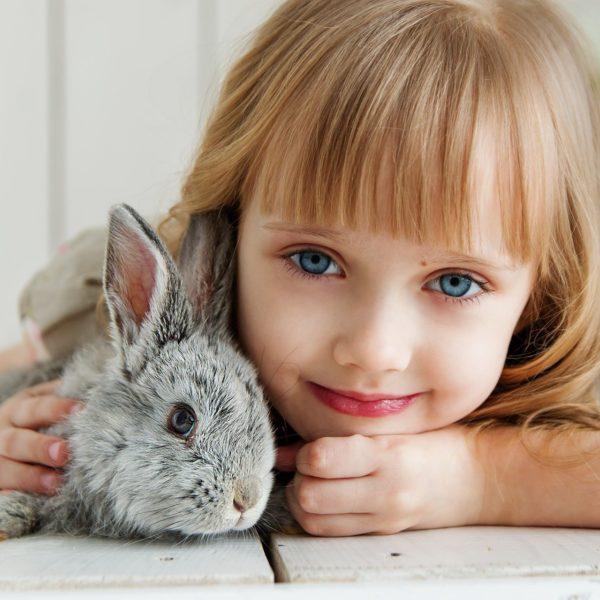 Accueillir un lapin dans son foyer