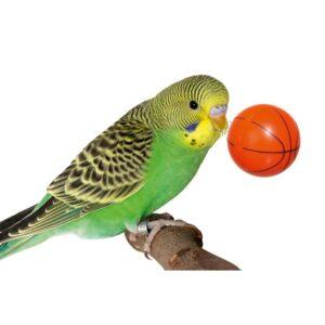 jeu d'intelligence basket ball perroquet perruche
