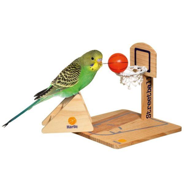 jeu d'intelligence basket ball perroquets perruches