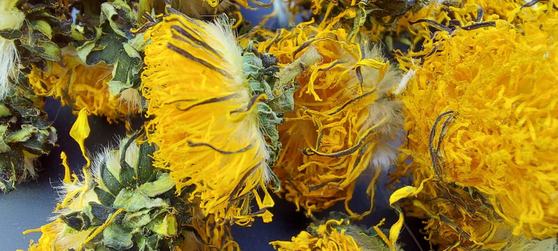 fleurs de pissenlits france bamm paris lapins rongeurs