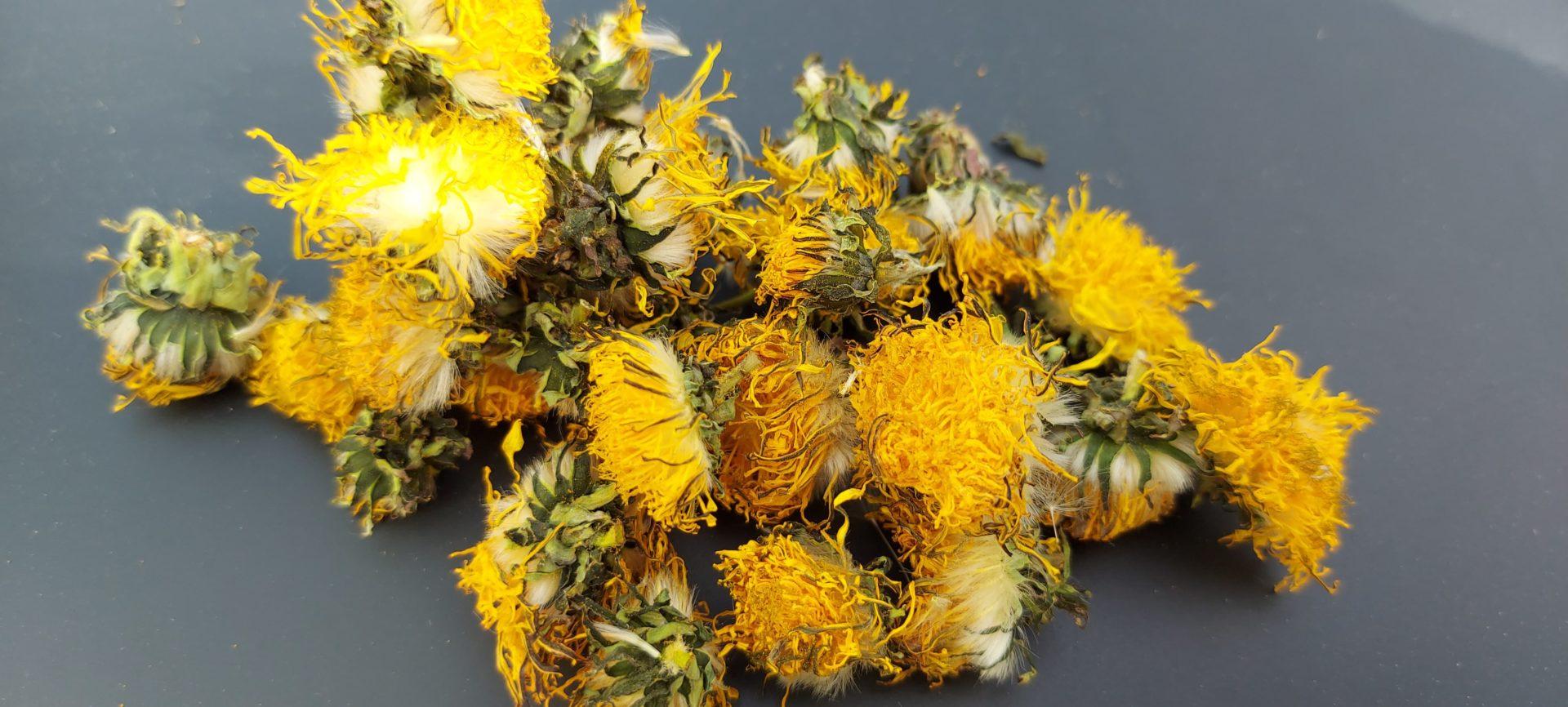 fleurs de pissenlits france bamm paris