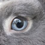 vision lapin vue