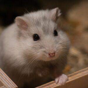 habitat hamster nain dimensions cage