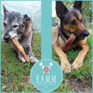 tendons de boeuf chiens bamm paris bubimex friandise naturelle